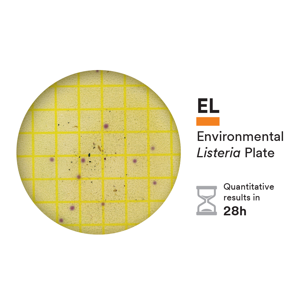 Environmental Listeria Plates with incubation