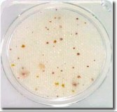 compact-dry-tc-for-total-microbial-counts